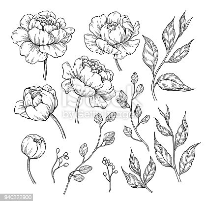 Peony flower and leaves drawing. Vector hand drawn engraved floral set. Botanical rose, branch and berry  Black ink sketch. Great for tattoo, invitations, greeting cards, decor
