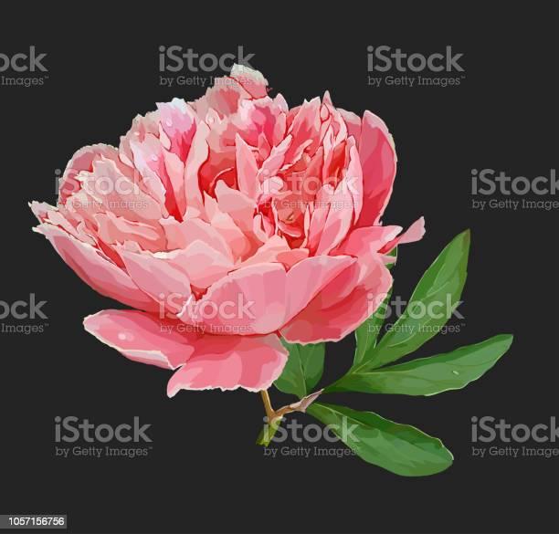 Peony flower vector id1057156756?b=1&k=6&m=1057156756&s=612x612&h=n9mkf0uwpertgiw5byj5smlqqgklxd5mrkye20w jwe=