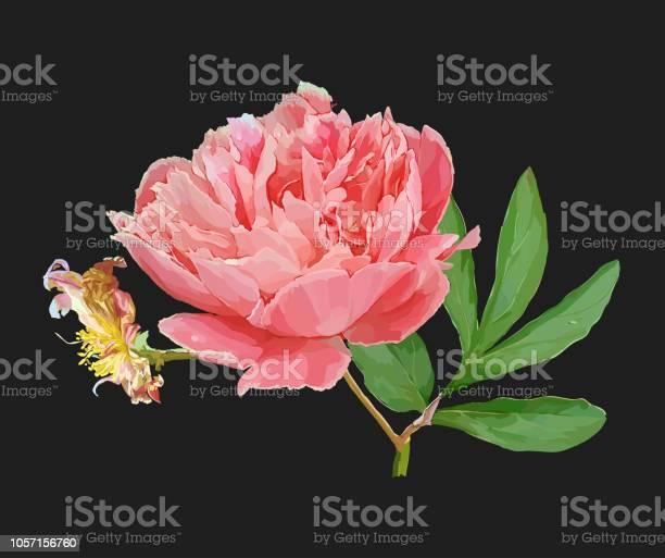 Peony flower vector id1057156760?b=1&k=6&m=1057156760&s=612x612&h= tlcd8nxcvl3fksuquso10snh4mwcrsjpacgjlknvia=