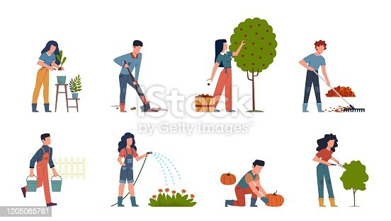 People gardening. Characters doing farming job watering, gathering, planting, growing and transplant sprouts using equipment vector gardener set