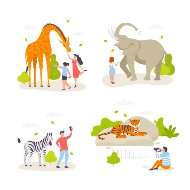 menschen im zoo tiere betrachten und mit ihnen handeln. süße, wilde tiere, fröhliche menschen, kinder cartoon charaktere flache bauweise. giraffe, elefant, zebra, tiger isoliert. infografik-elemente. - elefantenkunst stock-grafiken, -clipart, -cartoons und -symbole