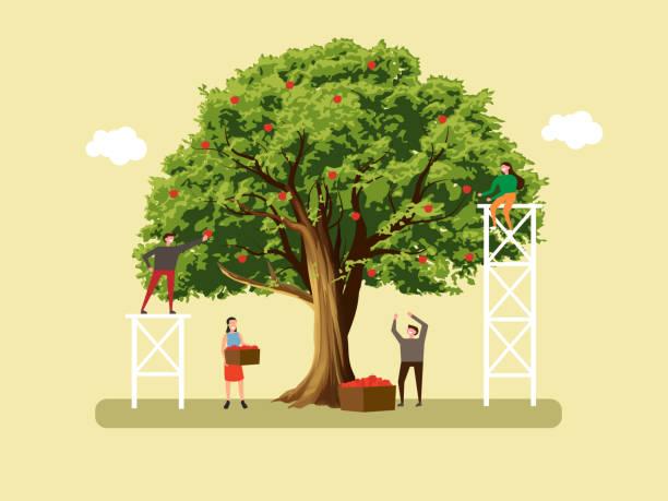 illustrazioni stock, clip art, cartoni animati e icone di tendenza di people pick apples. autumn harvest - raccogliere frutta