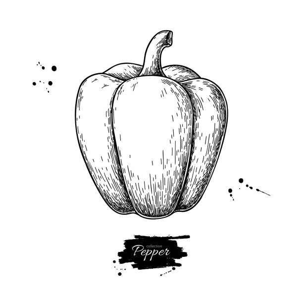 ilustrações de stock, clip art, desenhos animados e ícones de pepper hand drawn vector illustration. vegetable engraved style object. - red bell pepper isolated