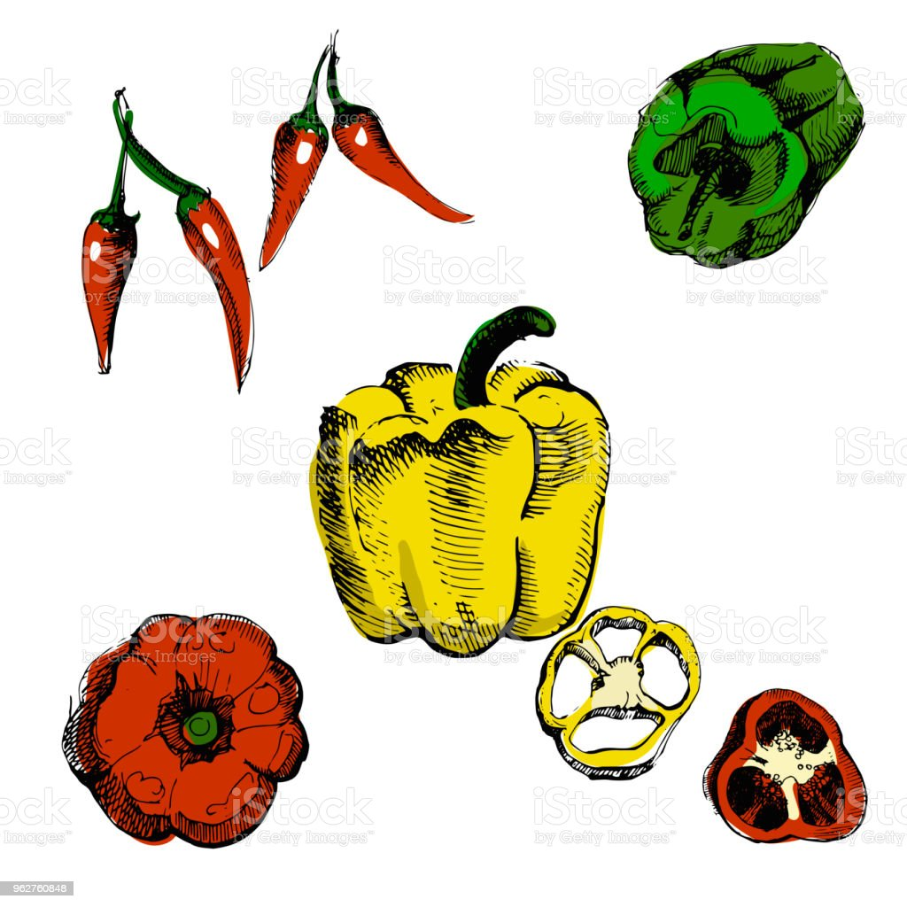 Pepper hand drawn vector illustration.Vintage colorful ink hand drawn pepper, isolated on white background. - arte vettoriale royalty-free di Alimentazione sana