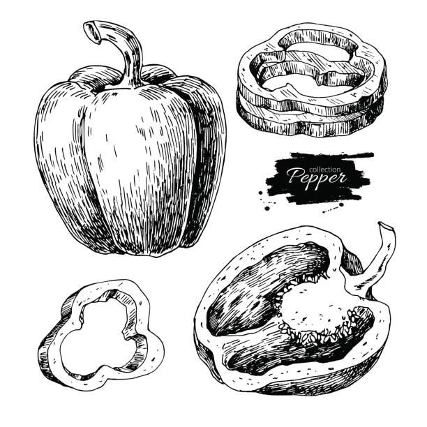 ilustrações de stock, clip art, desenhos animados e ícones de pepper hand drawn vector set. vegetable engraved style object, full, half and slices. - red bell pepper isolated