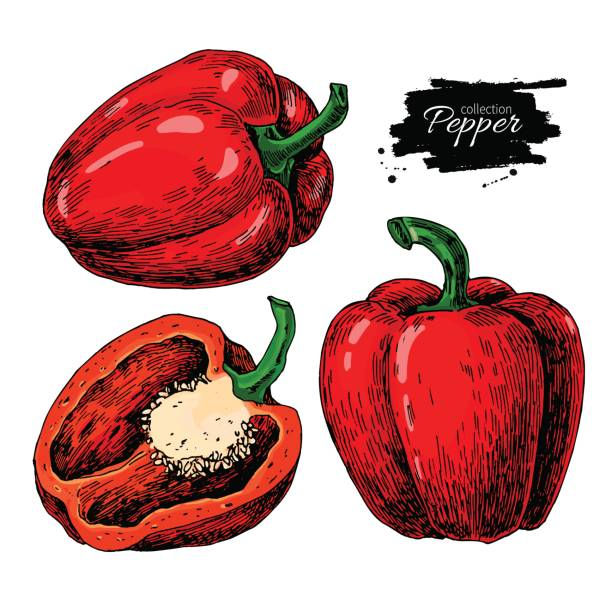 ilustrações de stock, clip art, desenhos animados e ícones de pepper hand drawn vector set. vegetable isolated object full, half - red bell pepper isolated
