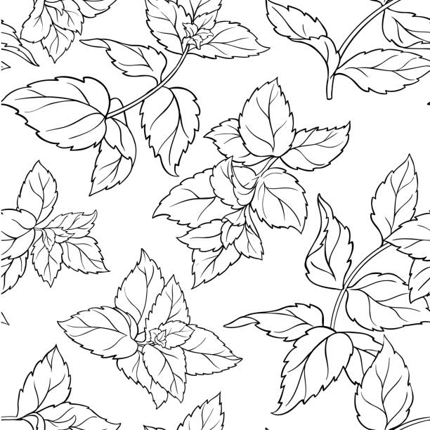 peppermint seamless pattern peppermint herb seamless pattern on white background mint candy stock illustrations