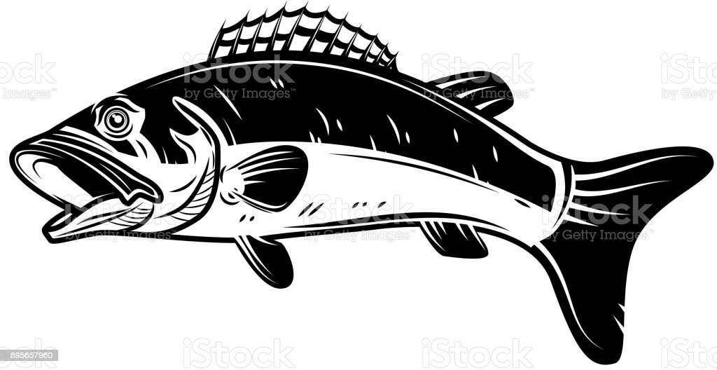 Perch fish icon isolated on white background. Design element for label, emblem, sign. vector art illustration