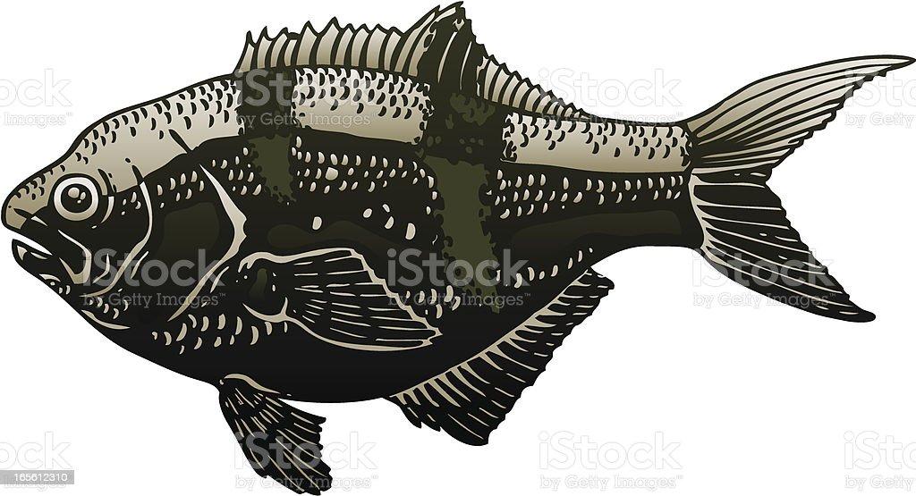 Perch vector art illustration