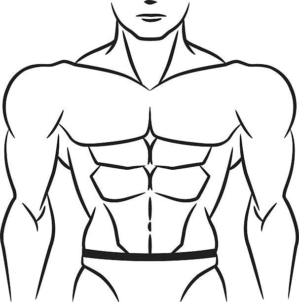 ilustrações de stock, clip art, desenhos animados e ícones de perfeito para os músculos abdominais e contorno - tronco nu