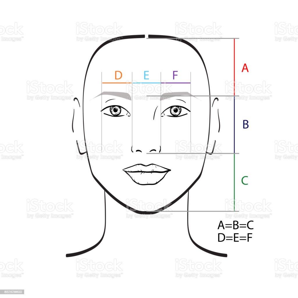 Perfektes Gesicht Proportionen Vektorillustration Stock Vektor Art Und Mehr Bilder Von Attraktive Frau Istock