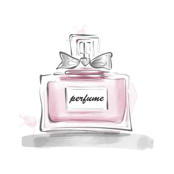 illustrazioni stock, clip art, cartoni animati e icone di tendenza di perfume bottle with bow vector illustration female template - profumi spray