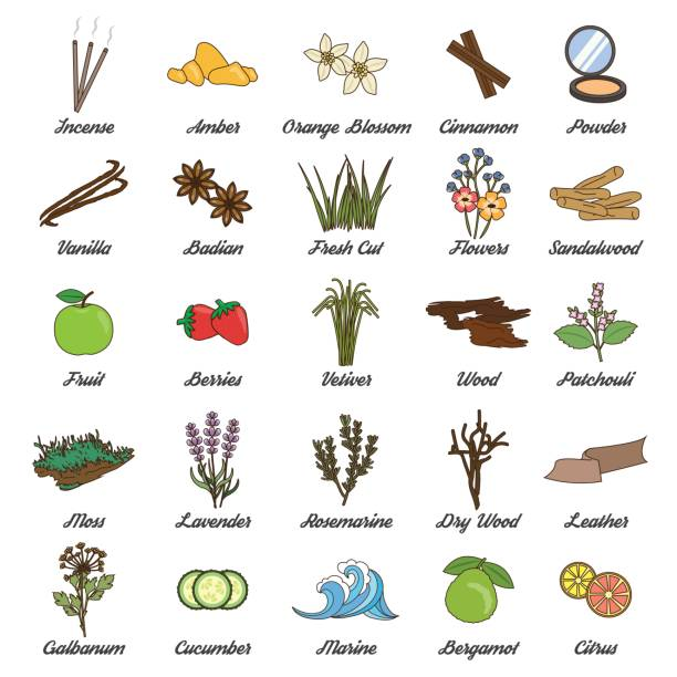 Perfume guide wheel infographic. Collection of icons for aromatic plants, herbas and woods for essense oils production. Perfume fragrance aroma ingredients. moss stock illustrations