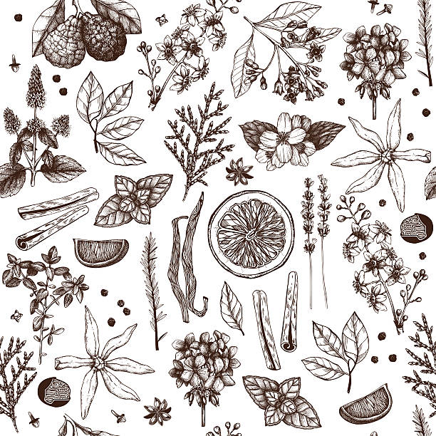Perfumery ingredients vintage background Vector seamless pattern with hand drawn perfumery and cosmetics materials and ingredient sketch isolated on white lavender plant stock illustrations