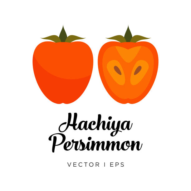ilustrações de stock, clip art, desenhos animados e ícones de persimmon vector editable illustration, hachiya type. kaki drawn in flat simple style. - diospiro