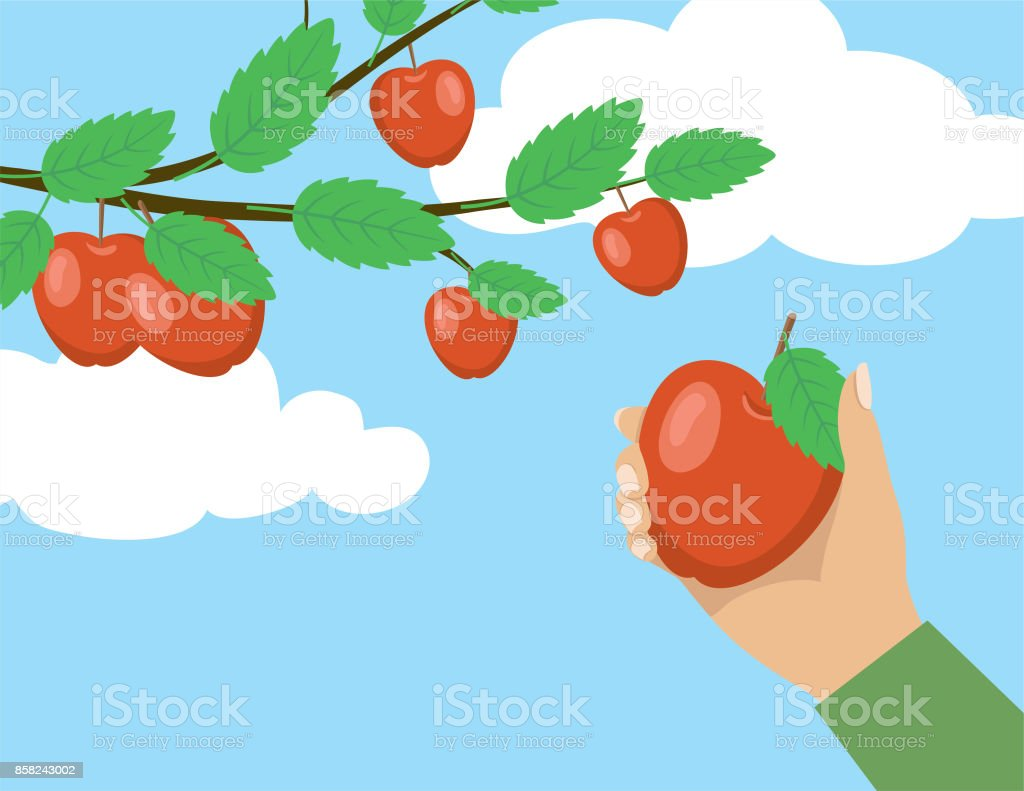 royalty free apple picking clip art vector images illustrations rh istockphoto com  apple picking clipart free