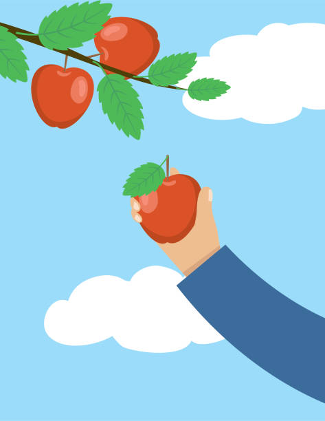ilustrações de stock, clip art, desenhos animados e ícones de a person picking fall apples. - picking fruit