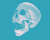 Perspective skull illustration on blue BG