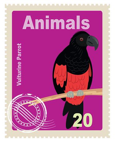 Pesquet's Parrot, Vulturin Parrot