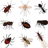 Vector icons of various insects that are unwanted pests that you may want to call an exterminator to eliminate.