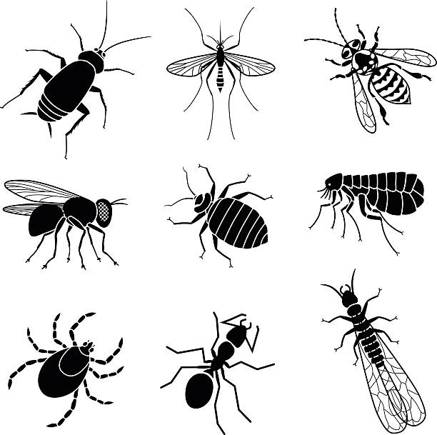pest insects Vector icons of pest insects people want to exterminate: cockroach, mosquito, yellow jacket bee, housefly, bed bug, flea, tick, ant, and termite. fly insect stock illustrations