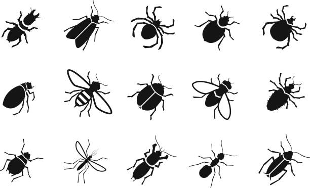 Pests and various insects set vector icons Pests and various insects set icons. vector illustration fly insect stock illustrations