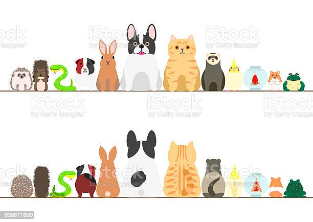 Pet animals border set front view and rear view vector id638611690?b=1&k=6&m=638611690&s=612x612&h=zetexl5iooa6rrk51alffwaoyvwxyvvg2rqhsxnruyu=