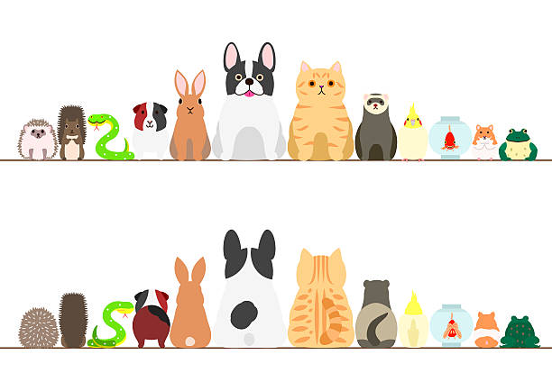 pet animals border set, front view and rear view - ハムスター点のイラスト素材/クリップアート素材/マンガ素材/アイコン素材