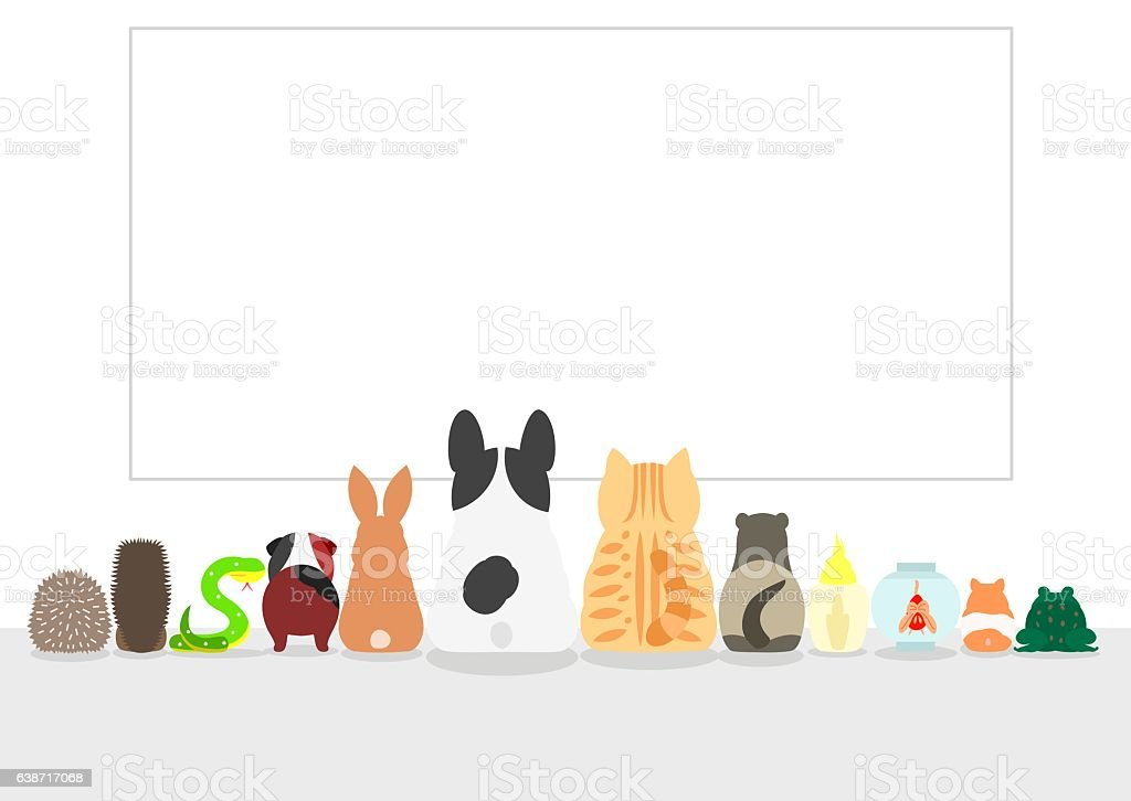 pet animals looking large blank board, rear view