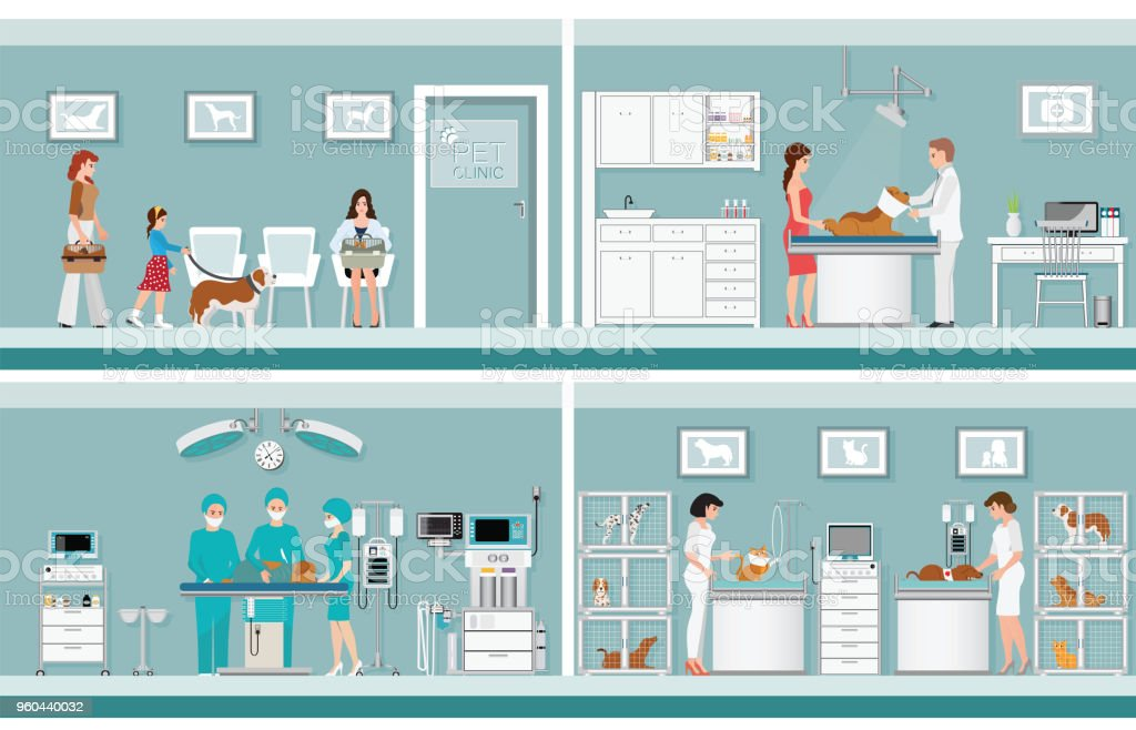 Pet care with veterinary in pet clinic. vector art illustration