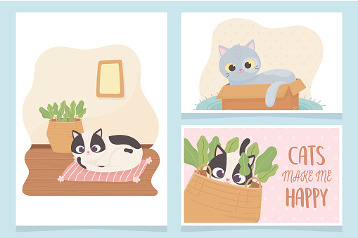 pet cats make me happy with box cushion and basket cartoon