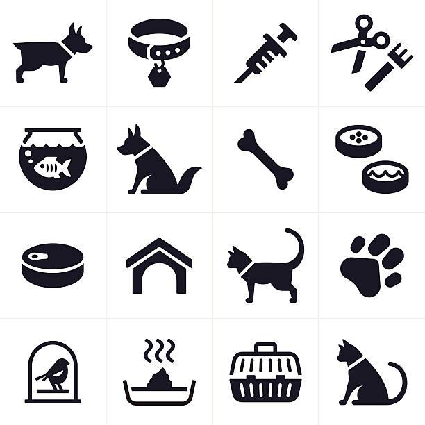 haustier-hund und katze icons und symbole - hundehalsbänder stock-grafiken, -clipart, -cartoons und -symbole