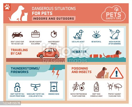 istock Pet safety tips 1024815376