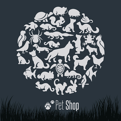 Pet Shop Collage