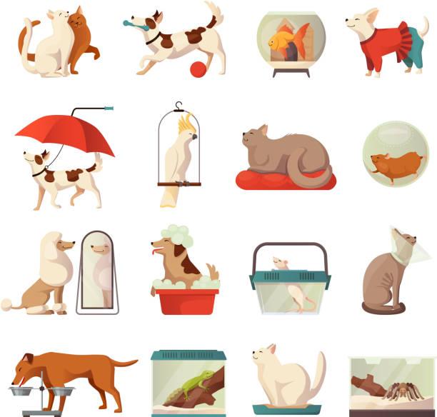 ilustraciones, imágenes clip art, dibujos animados e iconos de stock de iconos planos de tienda de mascotas - alimentar a tu perro