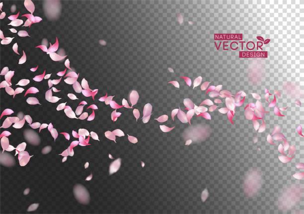 Petals Flying Background Sakura falling petals. Vector pink flying petals with blurred defocused transparent detail petal stock illustrations