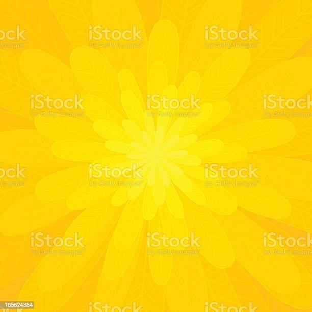 Petals of a bright yellow flower vector id165624384?b=1&k=6&m=165624384&s=612x612&h=lyxi6rhoqxltoadtdasn klwi ay6yqksjd3yykwkn4=