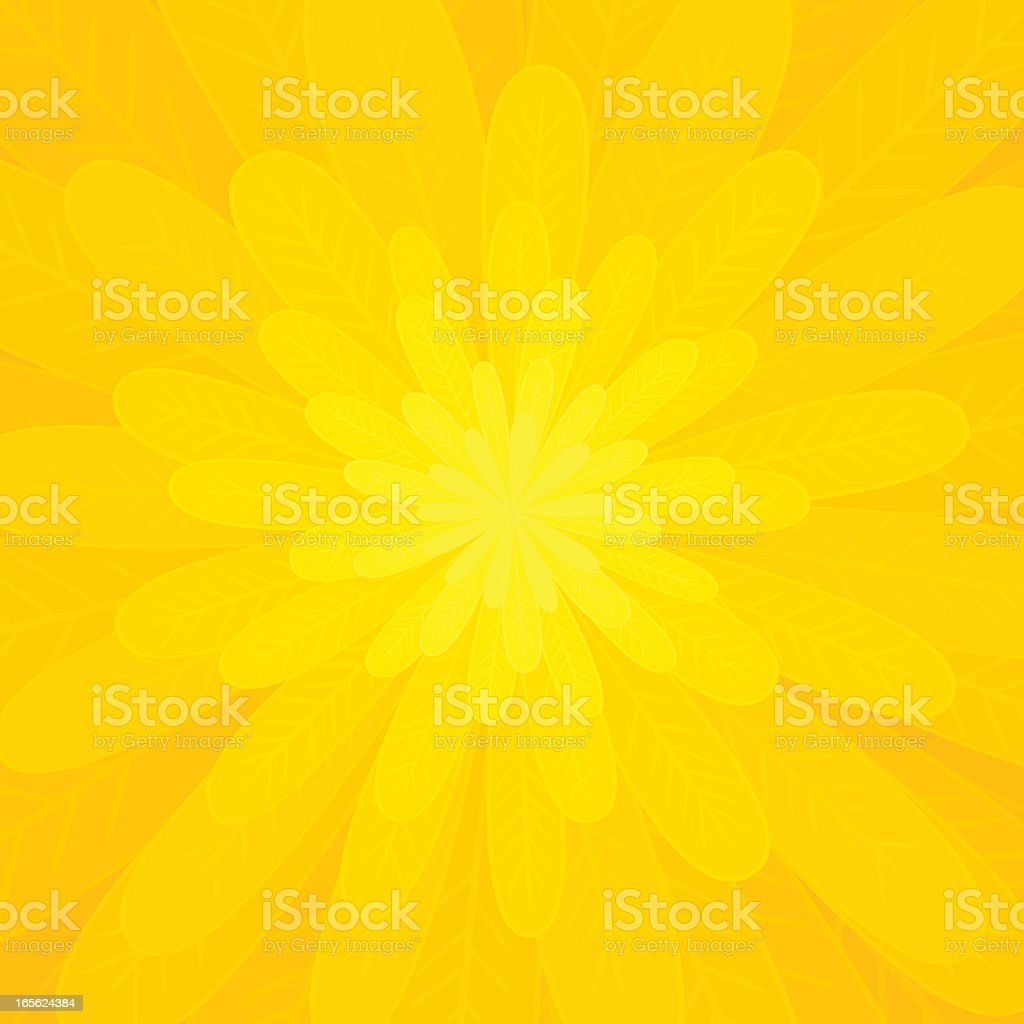 Petals of a bright yellow flower vector art illustration
