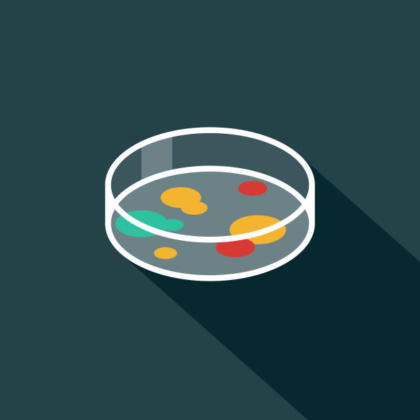 Petrti Dish Flat Design Science & Technology Icon with Side Shadow A flat design styled communication icon with a long side shadow. Color swatches are global so it's easy to edit and change the colors. petri dish stock illustrations