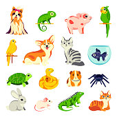 Pets animals set. Vector flat cartoon illustrations. Exotic domestic animal, birds and reptiles isolated on white background.