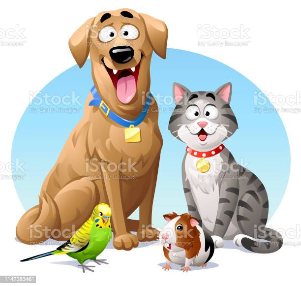 Pets cat dog budgie and guinea pig vector id1142383461?b=1&k=6&m=1142383461&s=612x612&h= oneh85mno1a 9rewphj h6muf29nf5fkqrmfza3r7u=