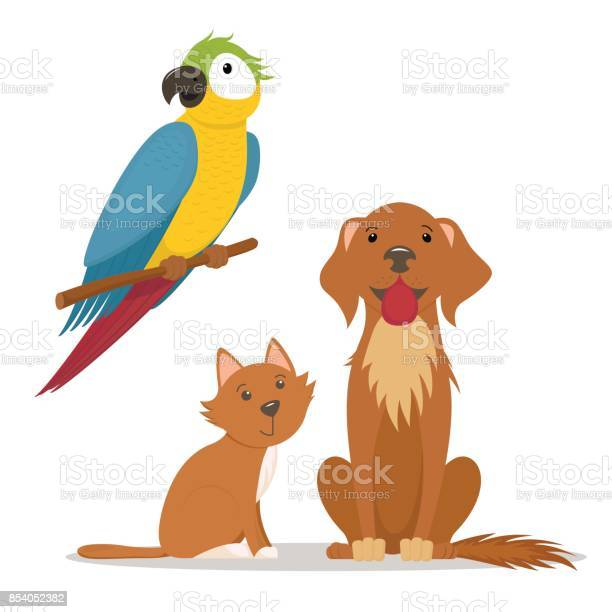 Pets cat labrador dog and ara macaw parrot vector id854052382?b=1&k=6&m=854052382&s=612x612&h=gksnpgckgnxbs7wpttzd9e6dghdnzj0wpepam2 jsri=