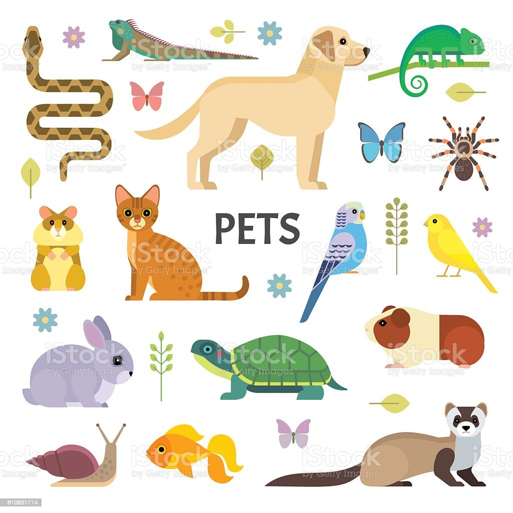 Pets collection vector art illustration