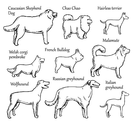 Pets Dogs Breeds
