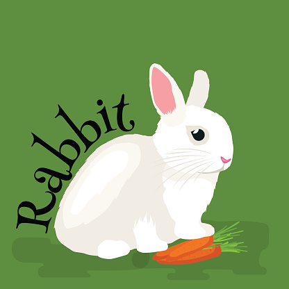 Pets, Domastic animals white rabbit isolated vector illustration background.