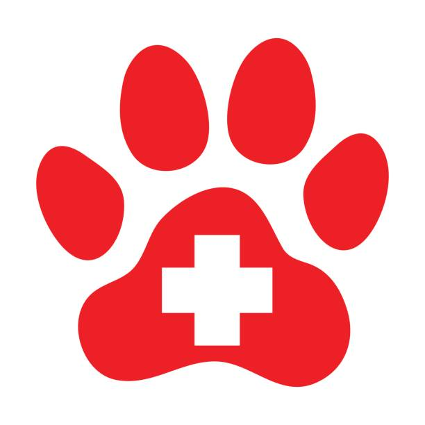 bildbanksillustrationer, clip art samt tecknat material och ikoner med hus djur första hjälpen. veterinär symbol. - djursjukhus