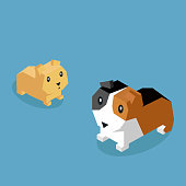 Pets Guinea Pig Icon Isometric 3d Design