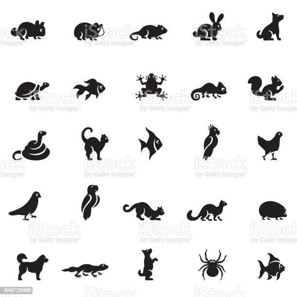 Pets icon set vector id646729996?b=1&k=6&m=646729996&s=612x612&h=1iluvvsqeydbiogoixpa0nr9elmgzwkd2tfyk7n qr8=