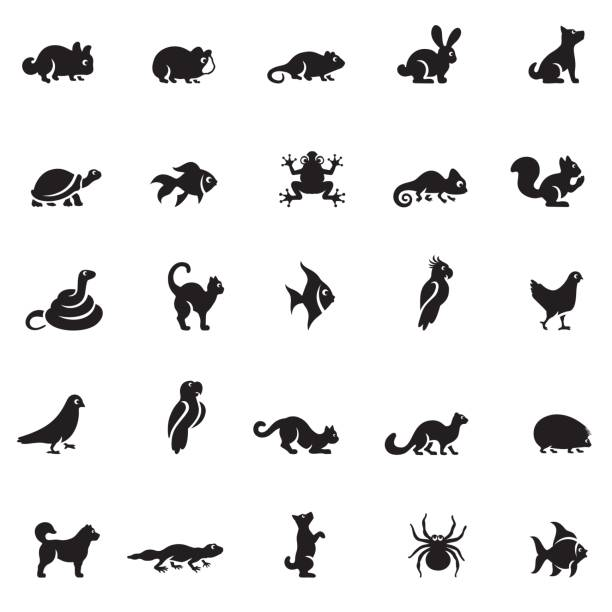 pets icon set - snail stock illustrations