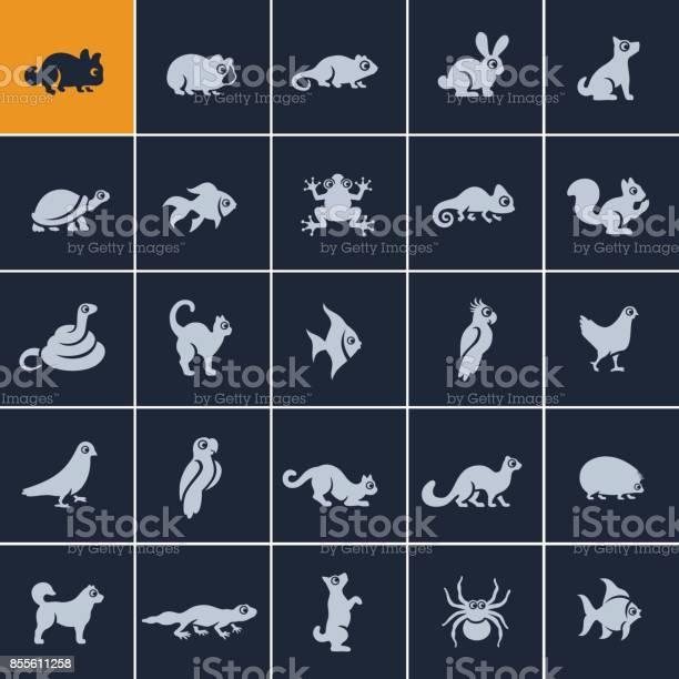Pets icon set vector id855611258?b=1&k=6&m=855611258&s=612x612&h=skxr3 dnfoysi3o3vattpcfaqrcuoqhj5f7ouze1ktq=